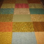Days 365+105 Finding Homes-carpet squares SFDS