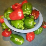Days 365+108 Bell peppers